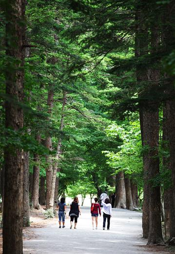 내소사 앞의 키 큰 전나무숲은 남녀노소 누구나 산책할 수 있는 편안한 길이다.