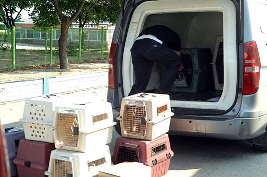 한국동물구조관리협회 직원이 서울 등에서 수집한 유기동물을 차에서 내리고 있다.