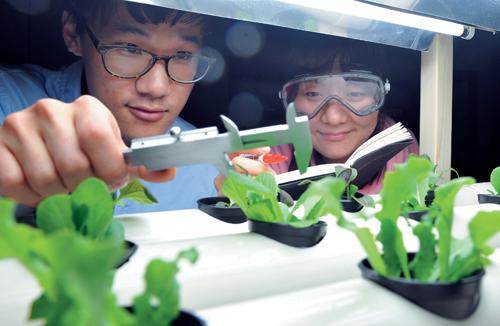 카이스트 학생들이 일군 '만나씨이에이'는 인공광원과 공조시스템 등을 통해 농작물을 재배하는 '식물공장'을 개발한다.