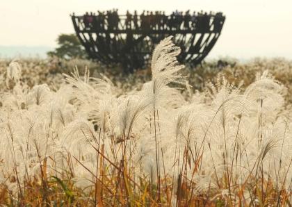 서울 마포구 상암동 하늘공원에 은빛 억새밭이 펼쳐져있다. 도심 속 억새 명소로 유명한 하늘공원에서는 26일까지 억새축제가 개최된다.