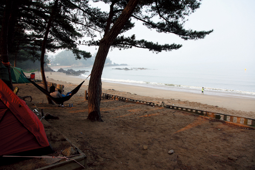 꾸지나무골 곰솔에 휴가를 즐기는 사람들이 보인다