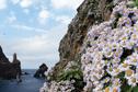 섬 자체가 천연기념물…새와 꽃의 낙원