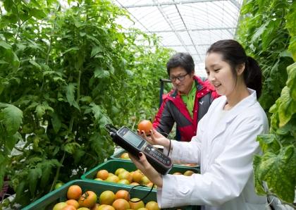 전남 화순의 한 스마트팜 토마토 농가. 2011년부터 복합환경제어시스템을 도입, 온실 안팎의 실시간 환경데이터를 수집해 생육을 직접 관리하고 있다.
