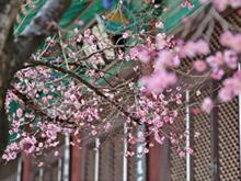 3월에 가볼만한 곳, '남도 꽃잔치'
