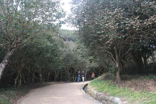천연기념물인 옥룡사지의 동백숲