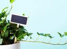 새집증후군 예방하는 공기정화 식물