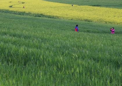 20일 오후 고창군 공음면 학원관광농장을 찾은 관람객들이 노란 유채꽃과 청보리 사이에서 봄정취를 즐기고 있다.
