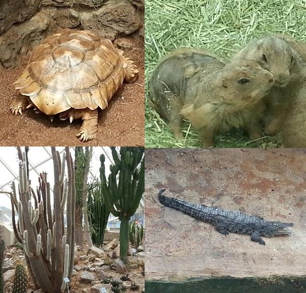 알다브라 육지거북이(80세),프레디독,사막관,나일악어