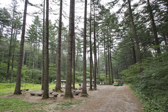포천 국립수목원.