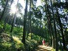 6월에 가볼 만한 곳, '힐링의 숲을 찾아서'