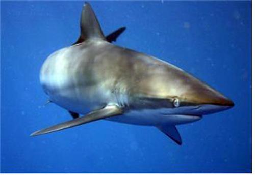 멸종위기 야생동식물 국제거래·해상반입 절차 강화