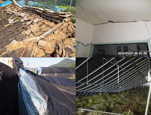 지진·태풍피해 온실·주택에 풍수해보험금 117억원 지급