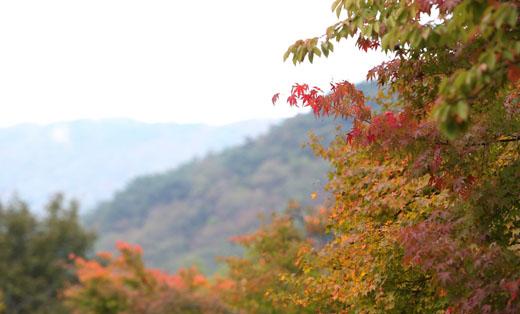 오색 단풍으로 물든 현충사의 가을 정취를 만끽할 수 있는 '가을 단풍 맞이 행사'를 오는 28일부터 30일까지 개최한다. (사진 = 공감포토)