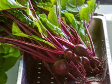 체력·지구력 향상 시키는 식품 4가지