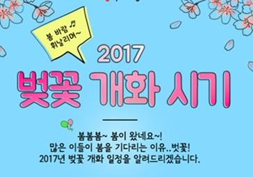 2017년 벚꽃 개화 시기