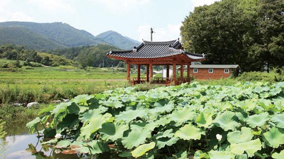 경북 영주 금대마을의 전경.(사진=금대마을)