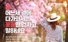 걷기 좋은 꽃길, 꽃축제