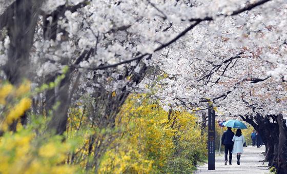 지난해 4월 봄꽃이 만개한 화창한 날씨 속에 시민이 산책을 하며 즐거운 한때를 보내고 있다. (사진=저작권자(c) 연합뉴스, 무단 전재-재배포 금지)