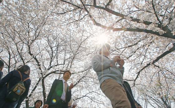 여의도 벚꽃 하늘 모습. <저작권자(c) 연합뉴스, 무단 전재-재배포 금지>