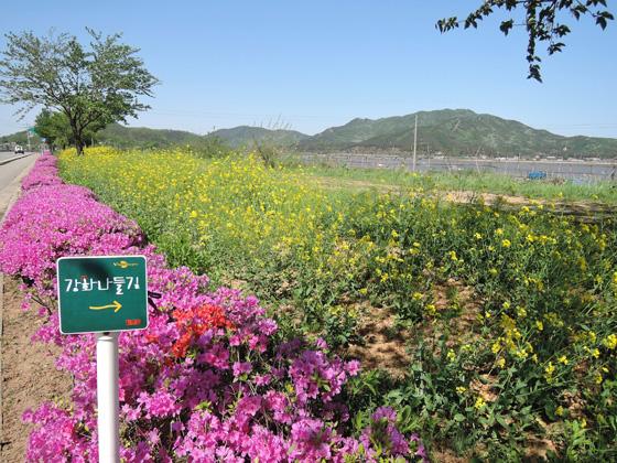 강화나들길 걷기코스에 피어있는 꽃들이 이어진다.