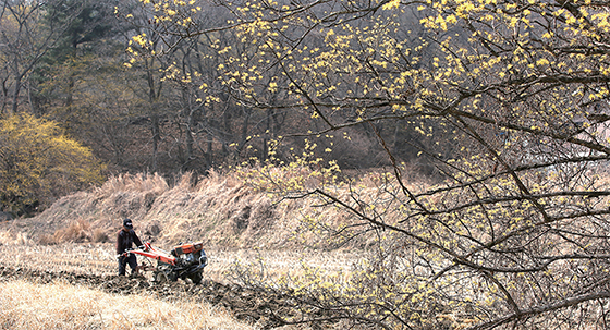 주읍리 마을풍경과 밭 가는 농부.