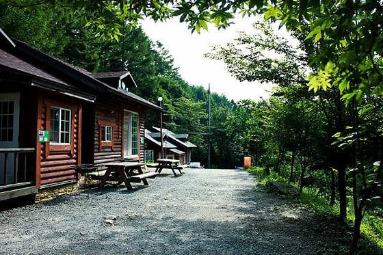 산림청은 개청 50주년을 맞아 50회에 걸쳐 '숲속 음악회'를 개회한다. 자세한 일정은 홈페이지(www.forest50.com)에서 확인 가능하다.