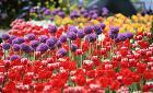 '고양'에서 '황홀한 꽃 세상' 만나다