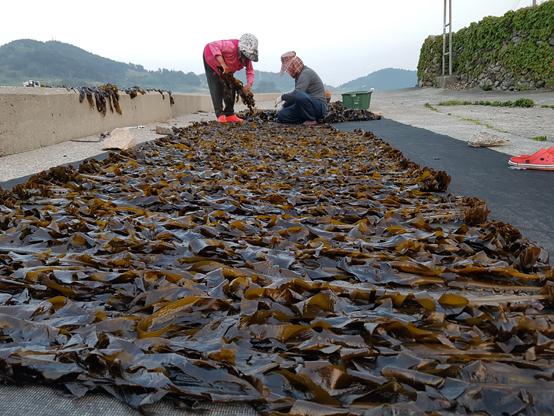 자연산 돌미역을 채취해 말리는 섬주민.