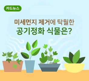미세먼지 제거에 탁월한 공기정화 식물은?
