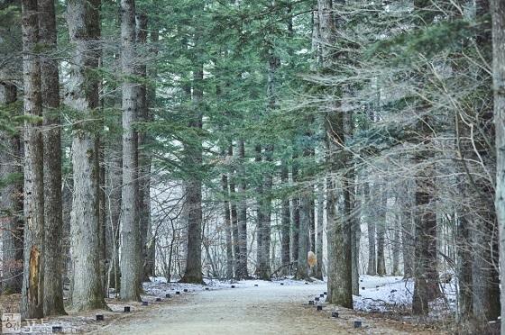 오대산 선재길의 전나무 숲. 1km의 전나무 숲은 종영된 인기 드라마 '도깨비'의 무대가 되어 '도깨비투어족'들도 많이 찾고 있다.(사진=공감포토)