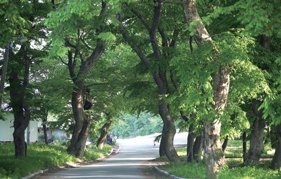 가족·연인과 함께 걷기 좋은 원단양 숲길.