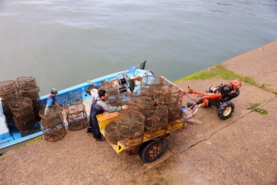 갑오징어를 잡는 통발이다. 대나무로 틀을 만들고 그물을 올려서 만든다. 봄철에서 여름까지 제철이다. 어장에서 건져온 통발을 갈무리해 보관하기 위해 운반하고 있다.