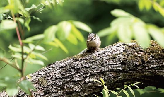 다람쥐 천국. 등산객에 아랑곳하지 않고 자유자재로 활보하는 다람쥐가 지천이다.