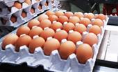 냉장고 속 계란 어떡하죠?…일문일답