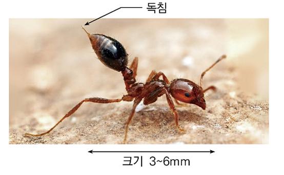독개미 국내유입 막아라…'검역 강화'