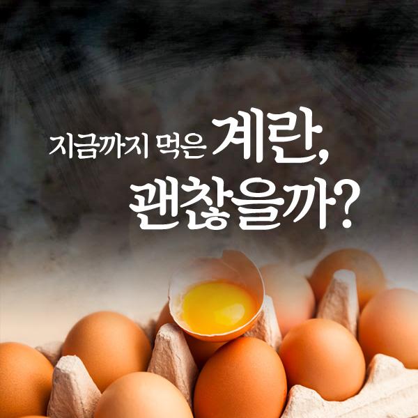 지금까지 먹은 계란, 괜찮을까?