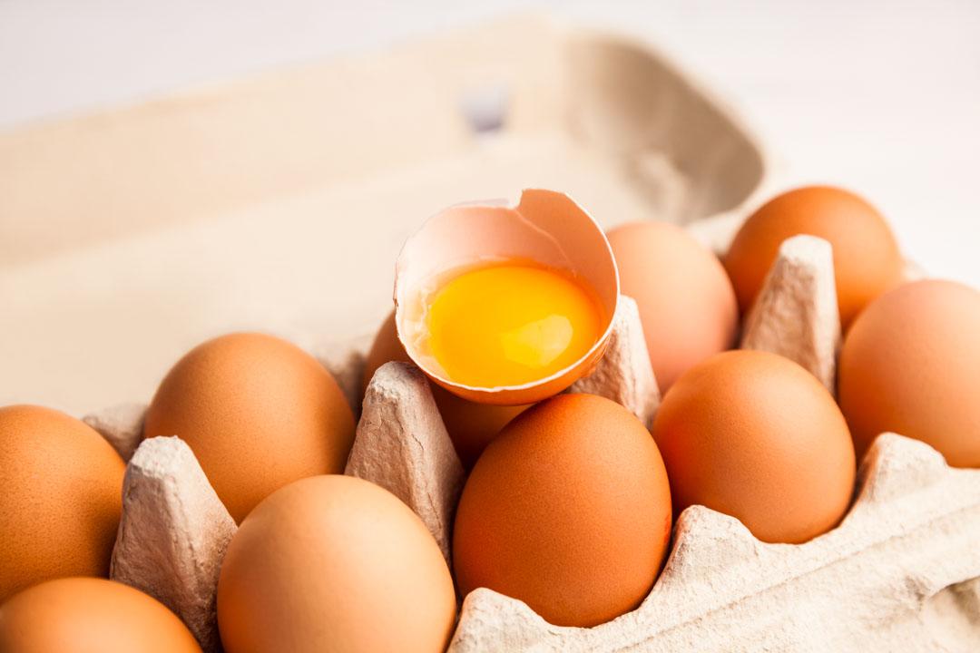 지금까지 먹은 계란, 괜찮을까;JSESSIONID_KOREA=ErMOk8EVs6Lssj0-fB3JW7hRl2SPIFeObes9OnULegUfkTclX3uP!1313502290!-384207593?