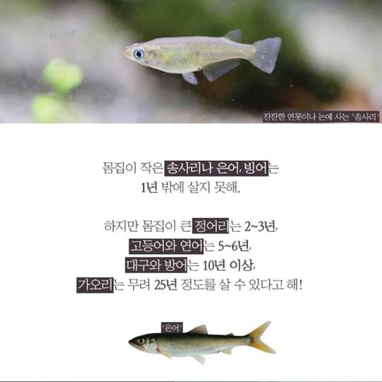물고기의 나이를 어떻게 알까
