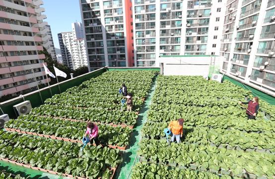 세계 유일 도시농업관리사 자격증 따볼까