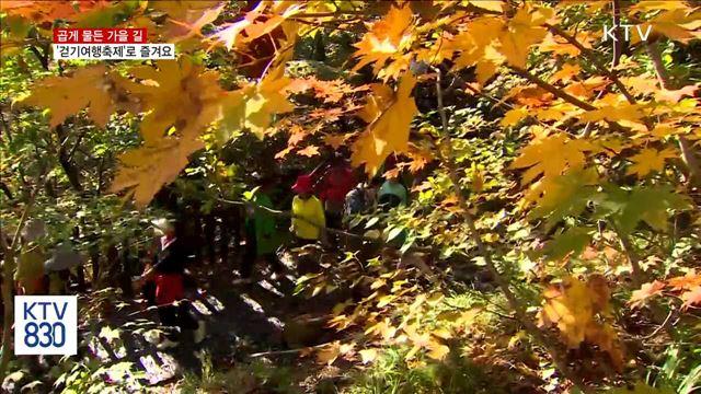 곱게 물든 가을길…'걷기여행축제'로 즐겨요