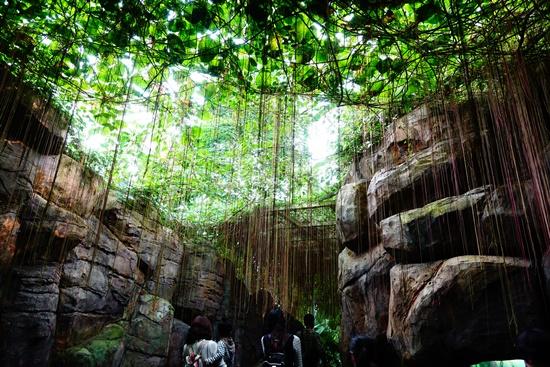 열대우림 가는 길