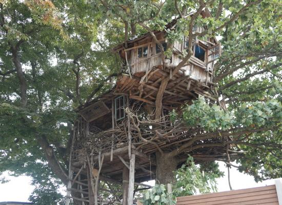 일본인 미즈노씨가 느티나무위에 지은 집, 이곳은 차를 마시는 공간이다.