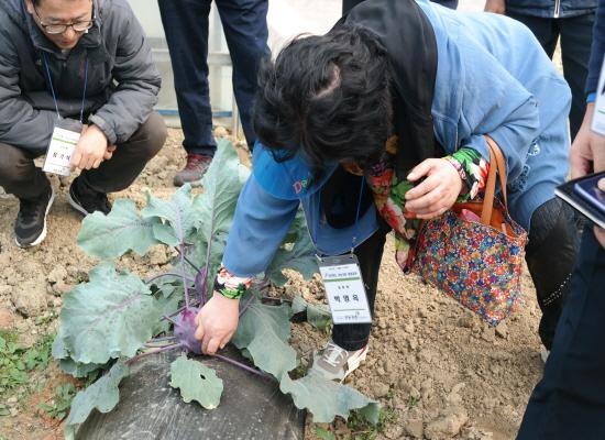 참가자들이 브로콜리 농장을 탐방하고 있다.