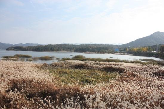 - '대청호 오백리길 4구간-호반낭만길은' 대전시 동구 마산동삼거리에서 시작해, 추동습지, 대청호자연생태관, 연꽃마을, 금성마을삼거리로 구성되며, 총 10㎞ 거리, 4시간이 소요되는 트래킹 코스다.