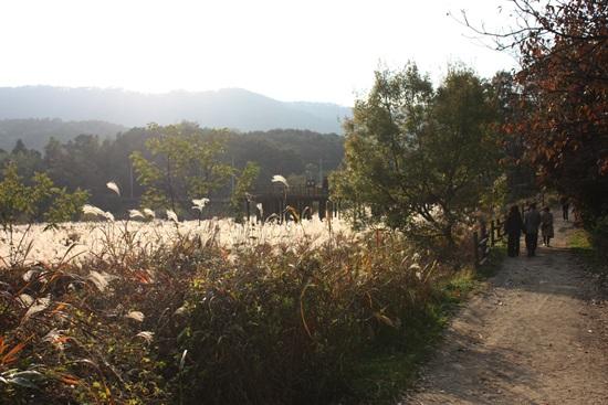 - 호반낭만길은 대청호의 숨겨진 보석과도 같다. 흙길을 걷고, 가을 바람을 쐬며, 오랜만에 늦가을을 맘껏 만끽한 시간이었다.