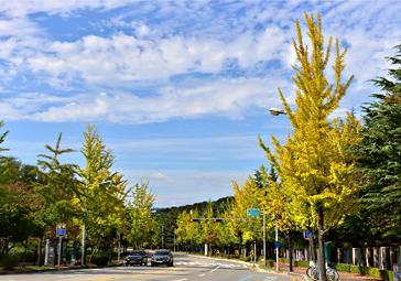11월 걷기여행길 10선, 빨갛게 노랗게 물든 가을을 만끽하러 가...