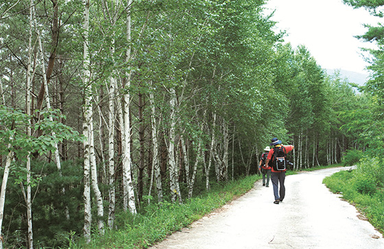 한반도지형마을을 지나 자작나무 쉼터로 들어서면 상쾌한 공기가 폐속 깊숙이 들어온다.(사진=문화체육관광부)