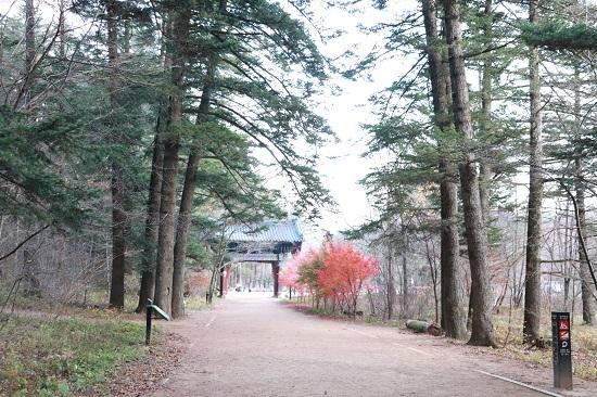 평창여행에서 빼놓을 수 없는 명소인 월정사 전나무숲