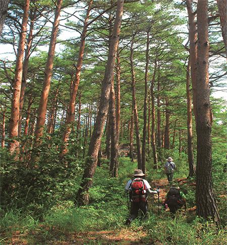 배나드리마을로 가는 길에 있는 숲길은 하늘 높이 솟은 소나무가 선선한 그늘을 만든다.(사진=문화체육관광부)
