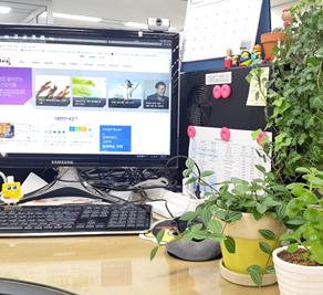 사무실에 식물이 좋은 이유